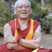 Lama Zopa Rinpoche: La liberazione degli animali non è una pratica limitata solo a voi stessi..