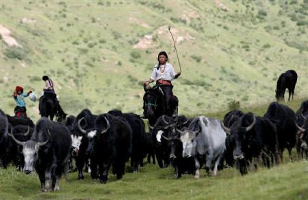 I nomadi, sradicati dai loro pascoli e ghettizzati alla periferia di piccole città o lungo alcune arterie di comunicazione, non hanno lavoro e mezzi di sussistenza. Molti si danno al bere o al gioco d'azzardo e la loro condizione è decisamente peggiorata.