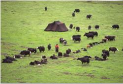 Accampamento di nomadi tibetani con le loro caratteristiche tende nere.