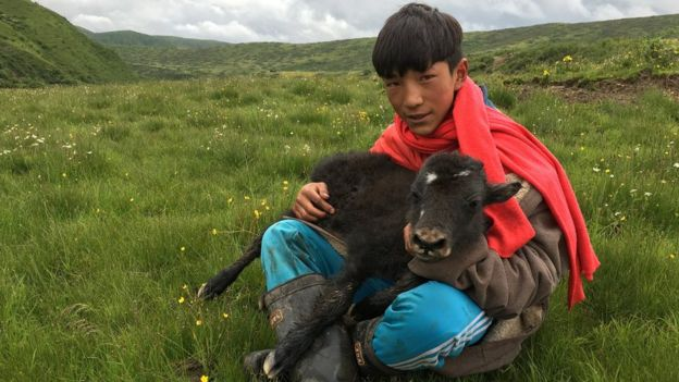 Many nomads feel a deep connection with their animals and the land